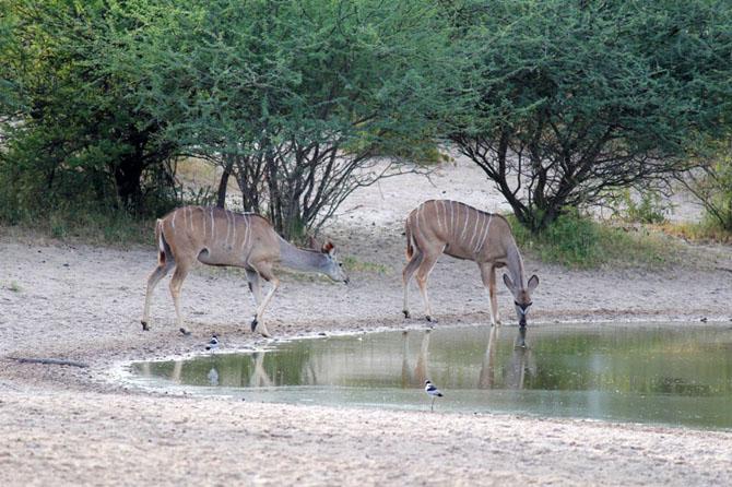 De Graaff Grassland Bushman Lodge A Lavish Retreat in Central Kalahari 3