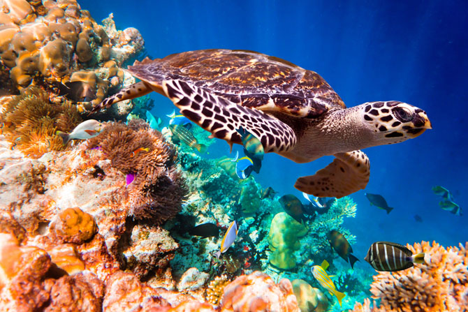 Diving in Cozumel A Fascinating Underwater Adventure 4