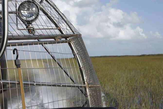 Everglades An Escape into Natures Wonderland 6