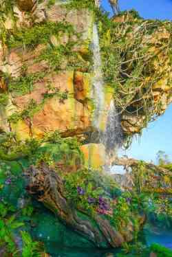 Disney Animal Kingdom Lodge (8 of 51)