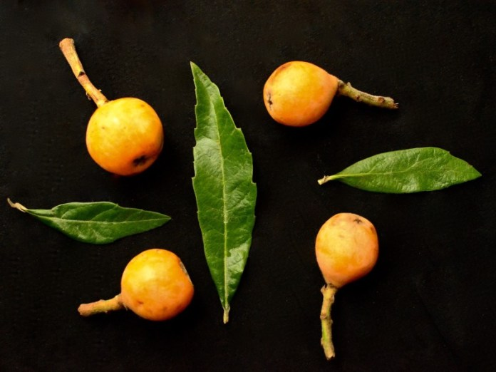 JAPANESE BIWA –  SEASON OF FRESH LOQUAT