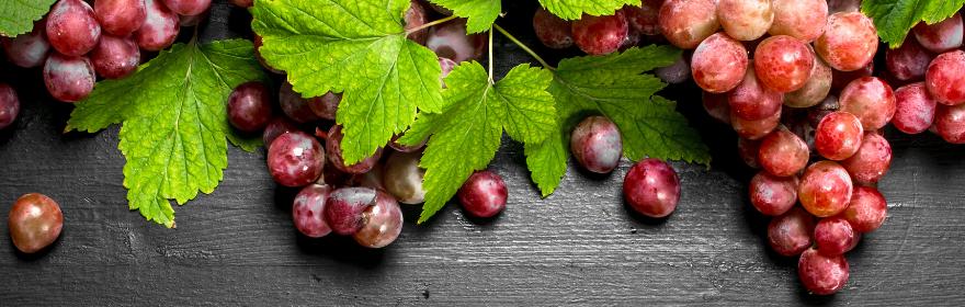 Le raisin, fruit de la vigne