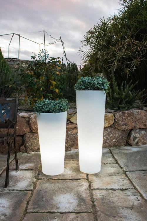 new garden ficus plant pots 2
