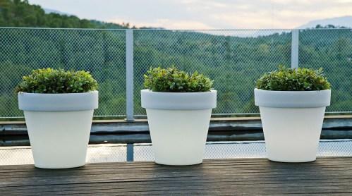 new garden magnolia plant pot 11