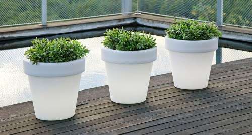 new garden magnolia plant pot 12