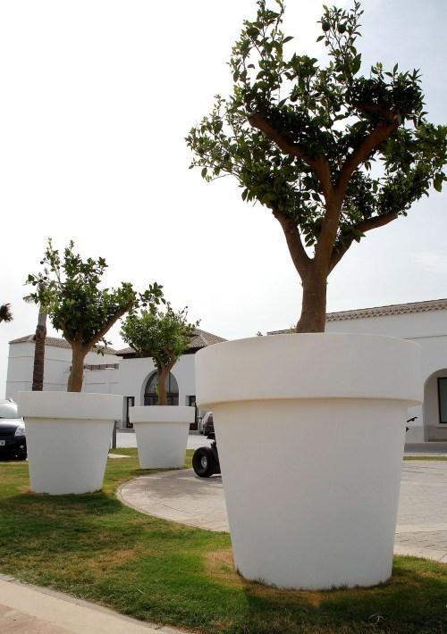 new garden magnolia plant pot 16