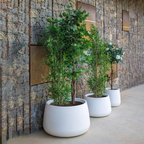 camelia 80 plant pot 2