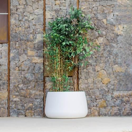 camelia 80 plant pot 3