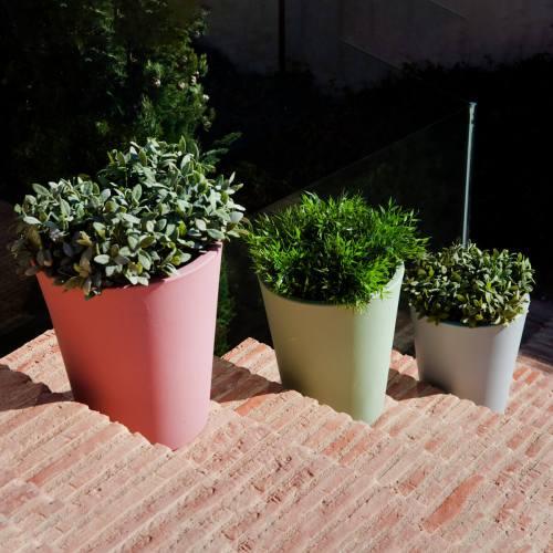gerbera 33 plant pot 1