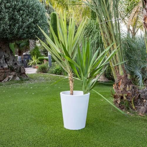 gerbera 45 plant pot 3