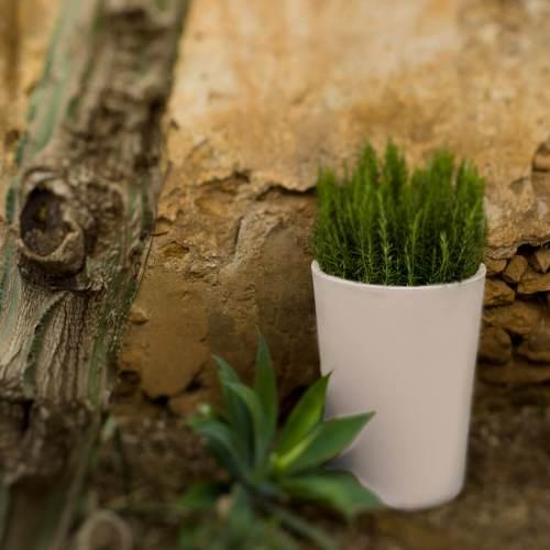 gerbera 53 plant pot 2