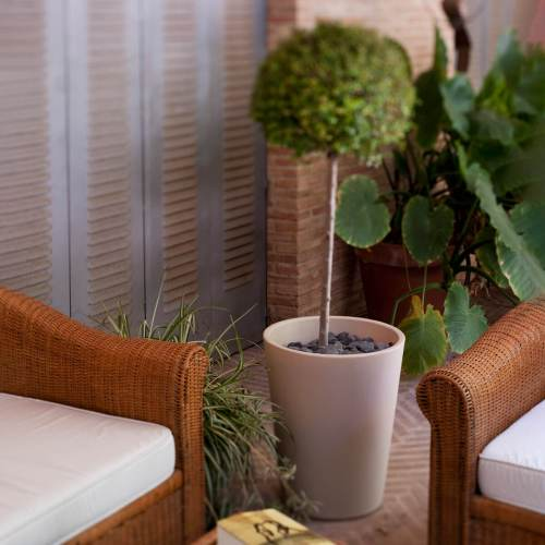 gerbera 53 plant pot 3