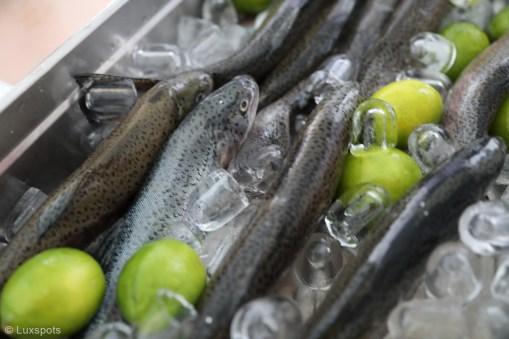 Fangfrische Forellen auf Eis