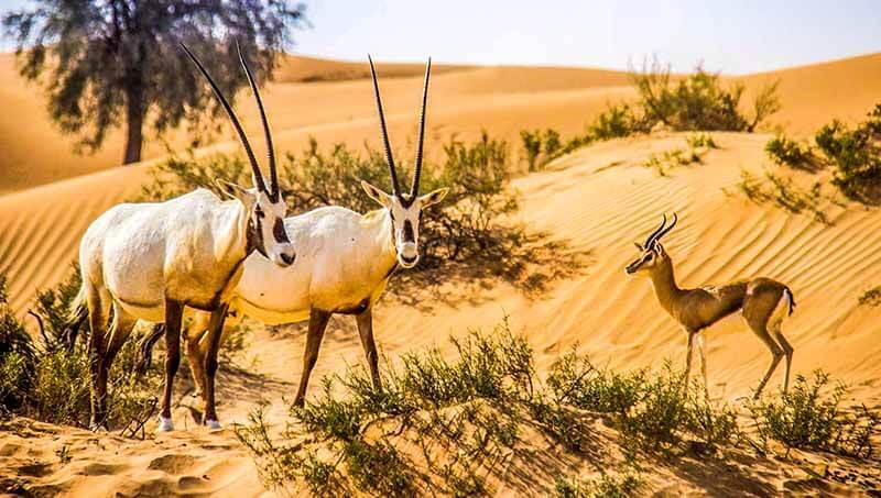 Dubai Wildlife - Luxuria Tours & Events