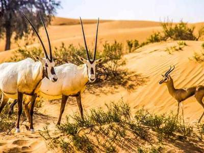 Dubai Wildlife - Luxuria Tours & Events