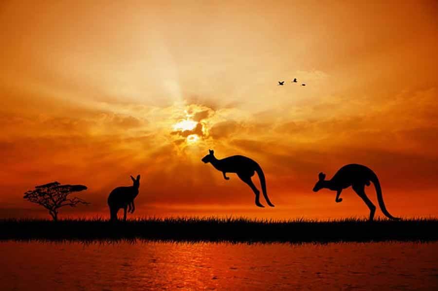 Australia Kangaroo - Luxuria Travel & Events