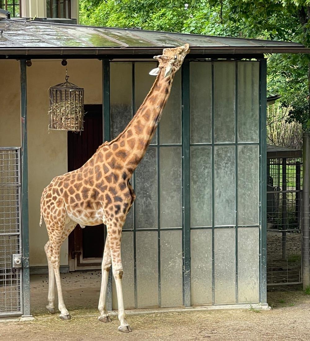 Basel-Zoo