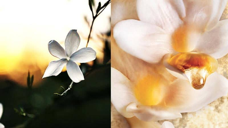 J-Adore-Absolu-fragrance