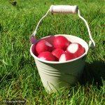 autumn-picnic-krug