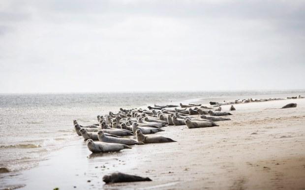 I de gode gamle dage var der danske østers på Rømø. De smagte fantastisk og blev til sidst udryddet af lækkersultne danere med kongen i spidsen. Nutidens østers stammer fra Stillehavet.