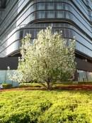 angela-asia-beijing-travel-blog-spring-flowers-in-bloom-5