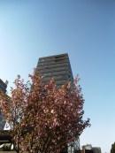 angela-asia-beijing-travel-blog-spring-flowers-in-bloom-7