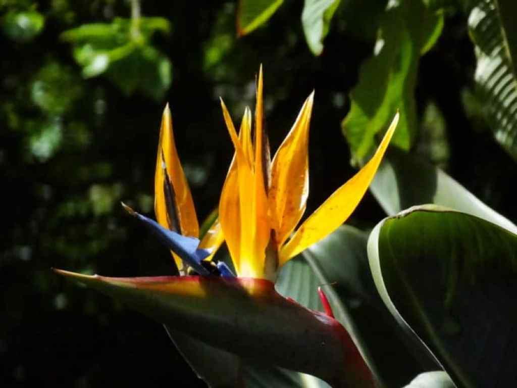 Madeira flower - www.luxurycolumnist.com