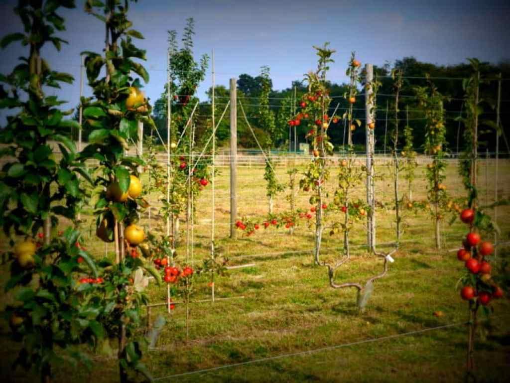Le Manoir orchard - Luxury Columnist
