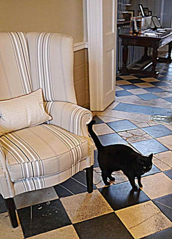 Royal Crescent cat - www.luxurycolumnist.com