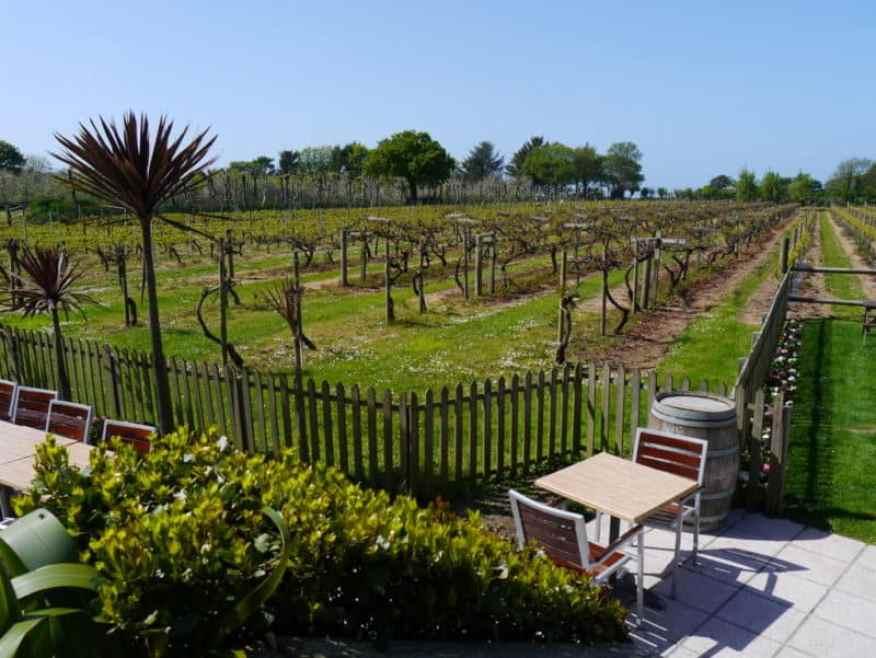 La Mare vineyard