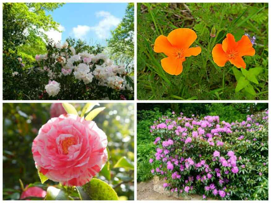 Longueville flowers