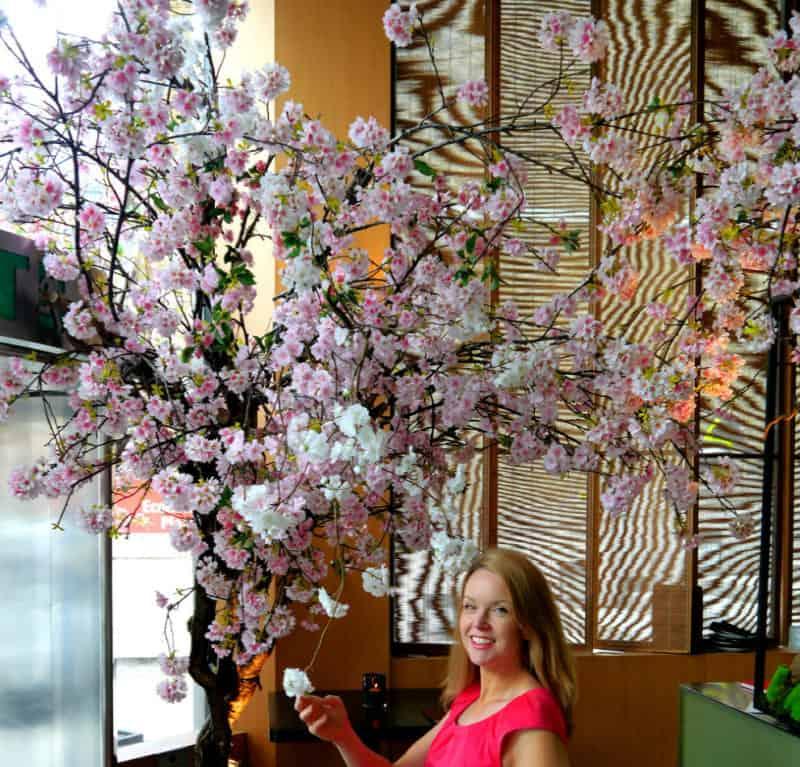 Sakura No Hana – Spring Blossoms and Sushi