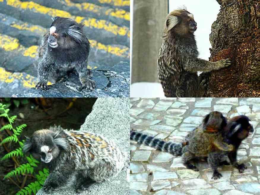 Monkeys in Rio