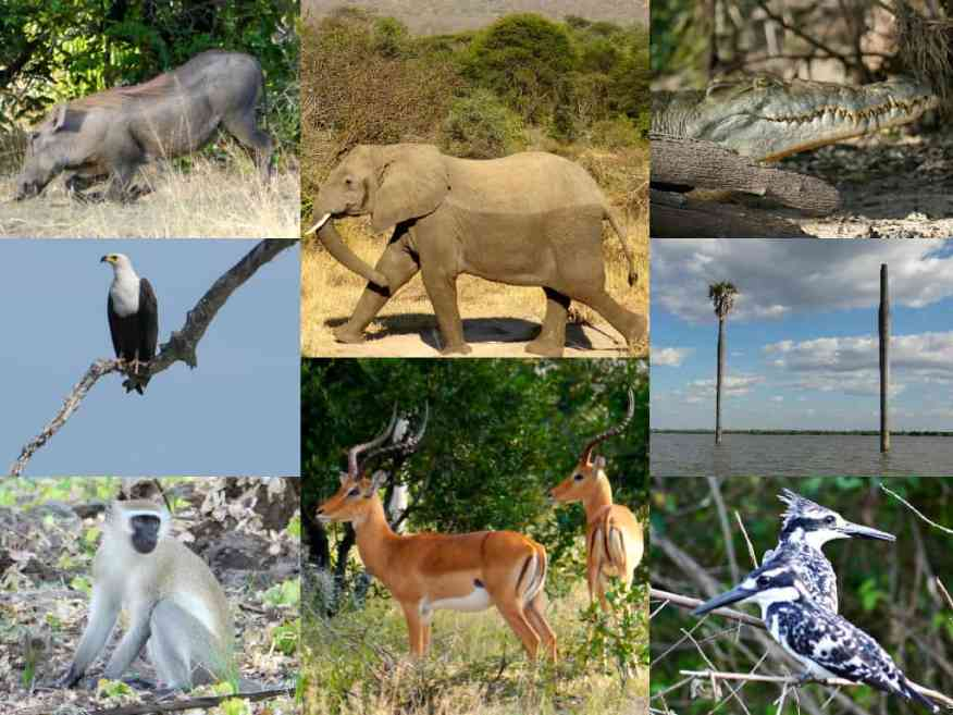 Tanzania wildlife