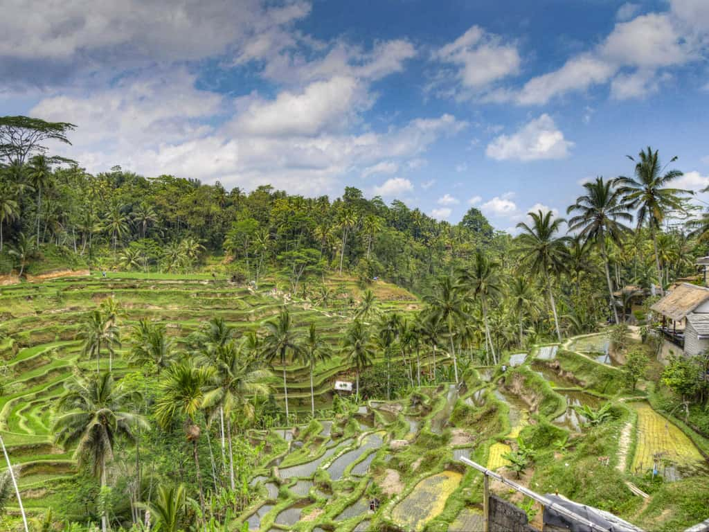 Beginner's Guide to Bali – What You Need To Know