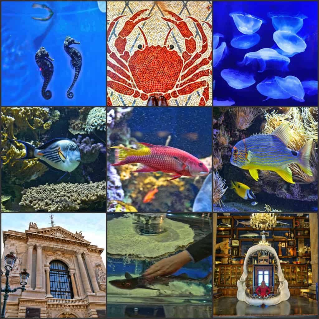 Monte Carlo Aquarium visit