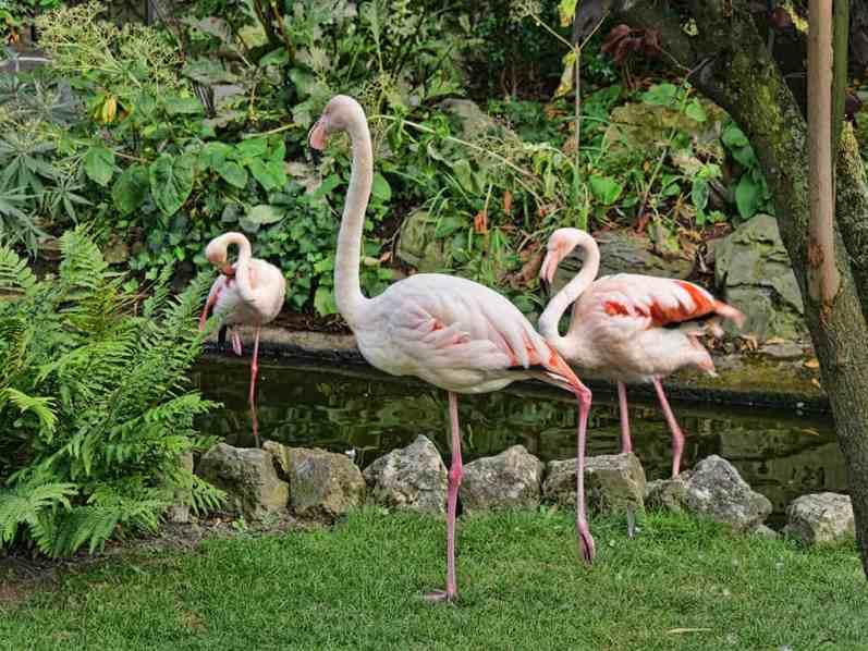 kensington_roof_gardens_flamingos