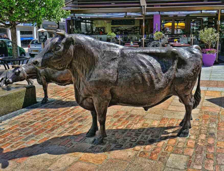 st_helier_jersey_cows