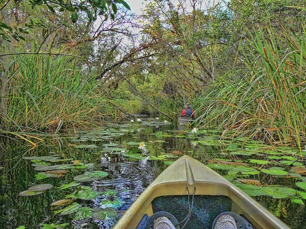 everglades-area-tour-waterlilies