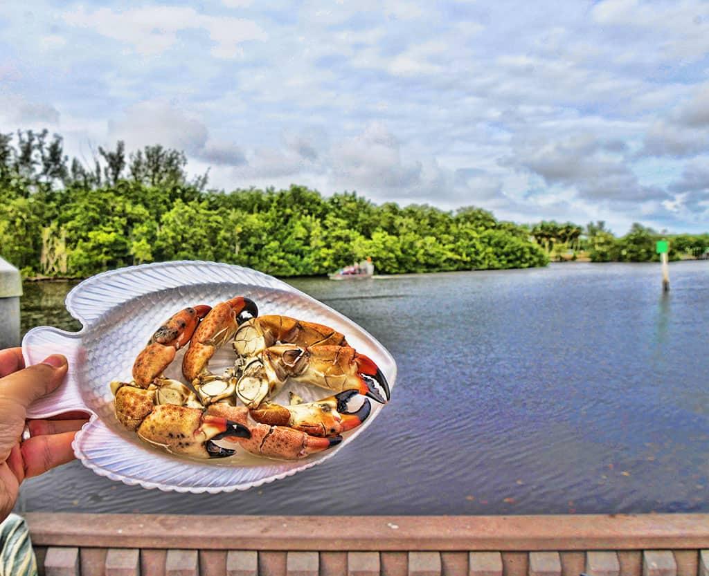 everglades-stone-crab