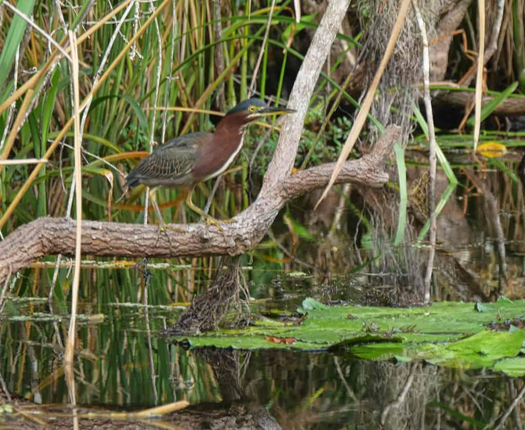 everglades-tour-bird