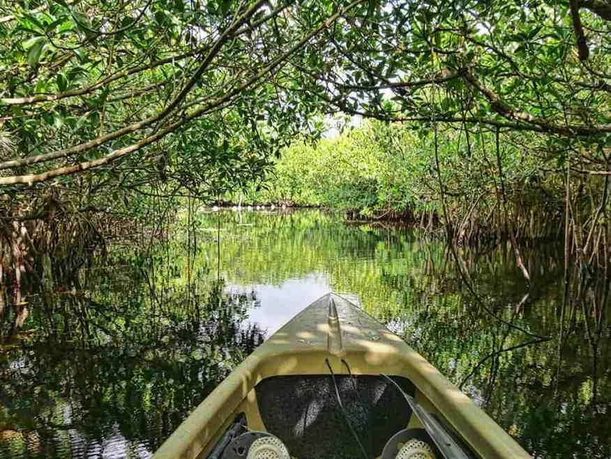 kayak-everglades-tour