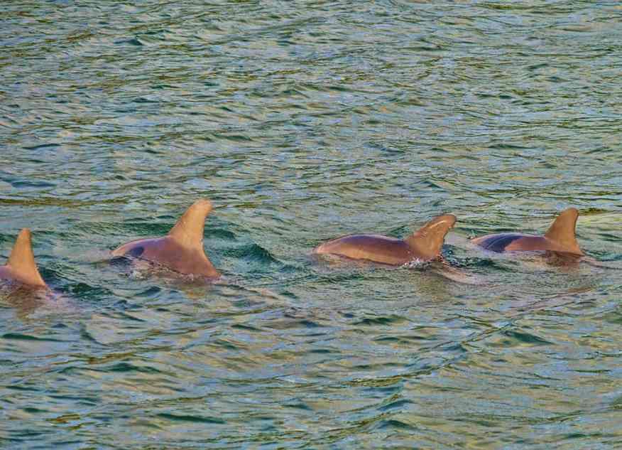 sunset_catamaran_cruise_dolphins