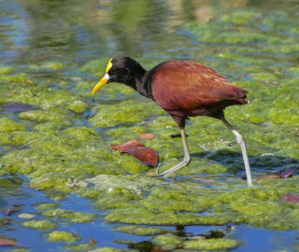 Mayakoba bird