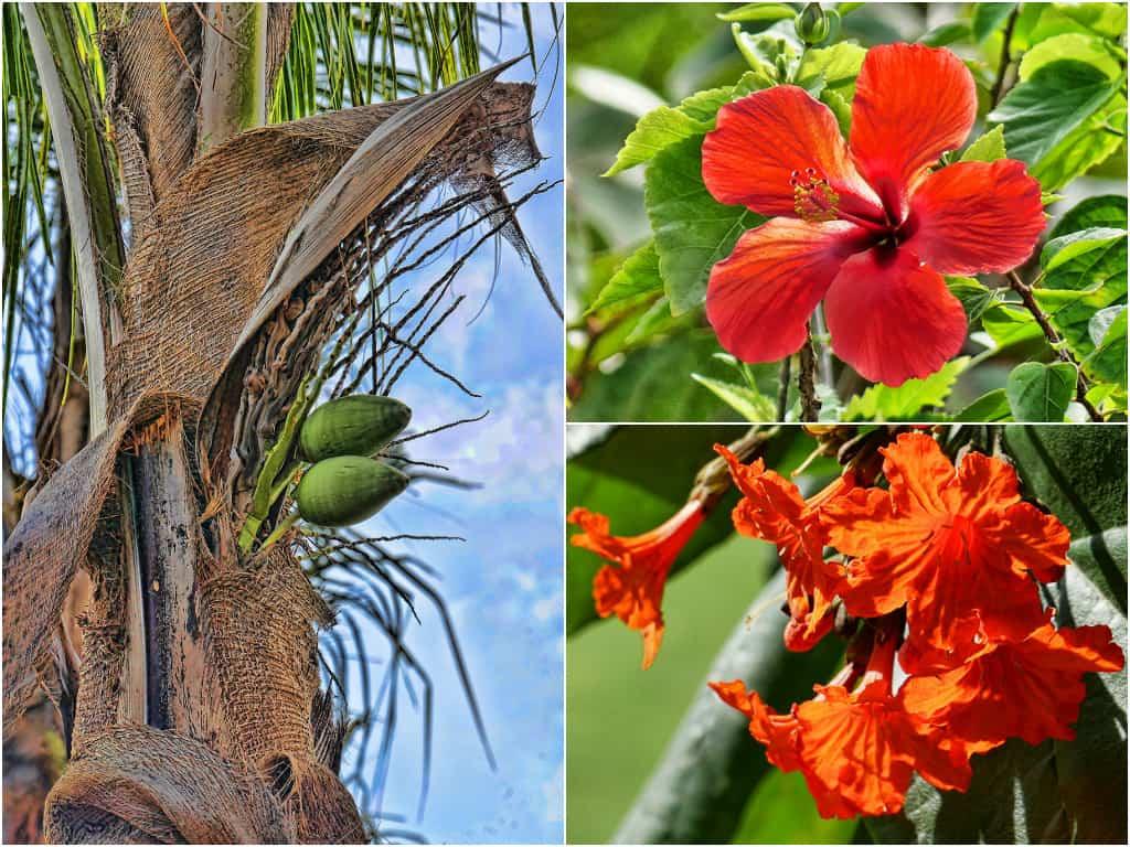 Riviera_Maya_flowers