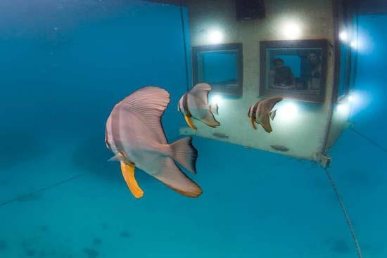 underwater-room-manta-resort-3