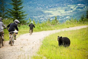 Mountain Bikes and Bears in Whistler BC