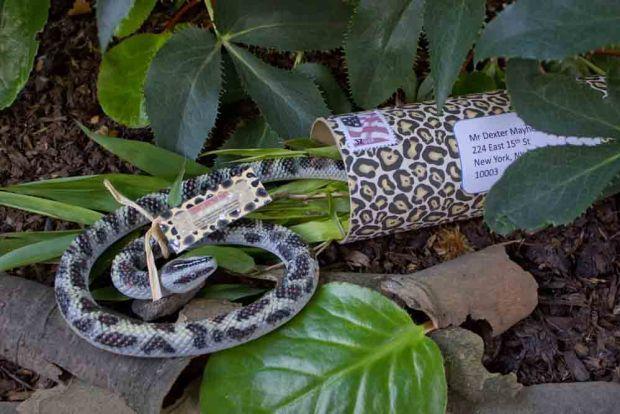create-invitations-jungle-invitation.jpg