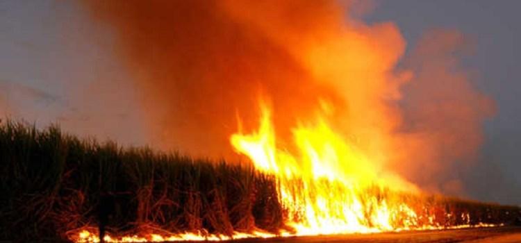 El gobierno provincial dice que sancionará a los cañeros que queman cañaverales
