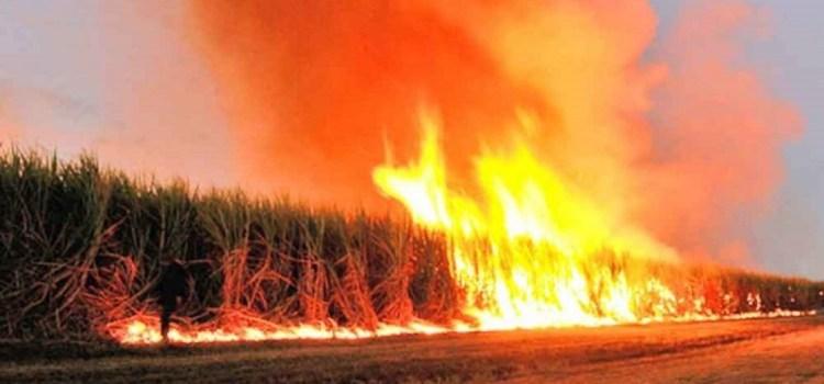 El gobierno provincial intenta controlar la quema de cañaverales